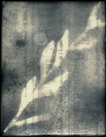 Herbier. Détail. Journaux de bourse, acrylique, acide. Galerie de Condé, Spa. 1999. Photographie: Dominique Tricnaux