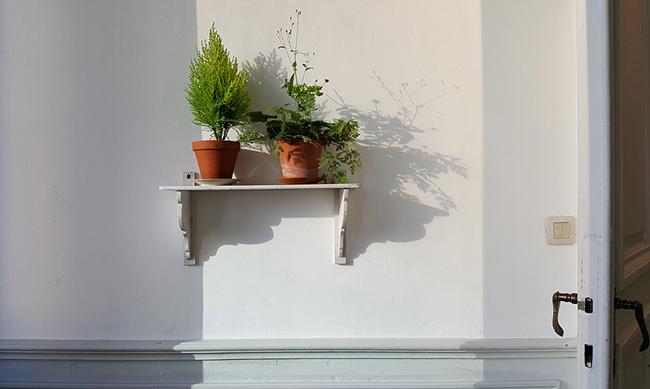 Sans titre. Mauvaises herbes du jardin et sapin en pot. Amollir Molloy, Galerie Flux, Liège. Septembre 2018. Photographie: Lino Polegato